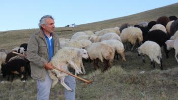 Çoban üretim için yol istedi