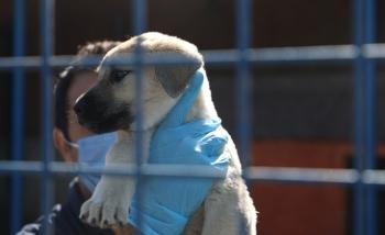 Erzurum'da hayvan bakım evleri kışa hazır