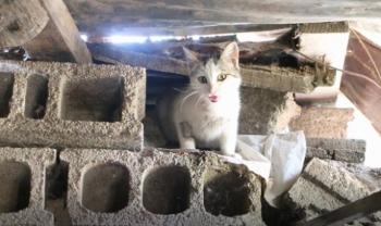 Minik kediler için iş makineleri çalışmayı durdurdu
