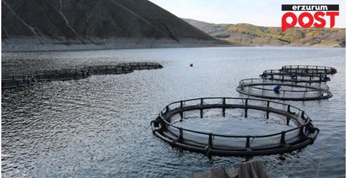 Erzurum'da su ürünleri yetiştiriciliği iki kat artacak