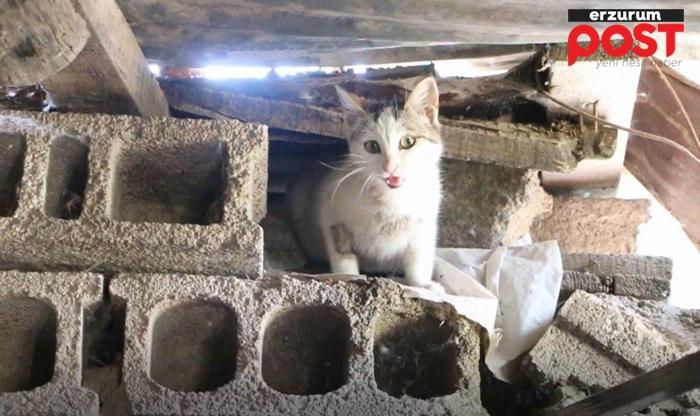 Minik kediler için hafriyat çalışması durduruldu